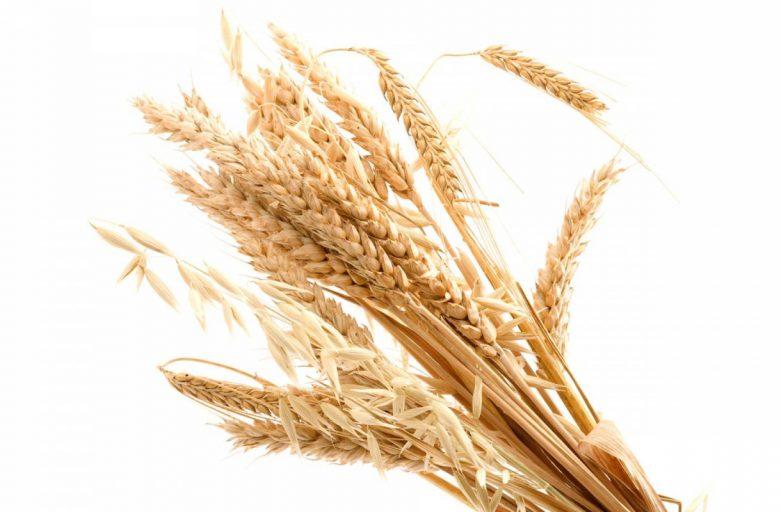 خرید فروش عمده گندم اوکراین