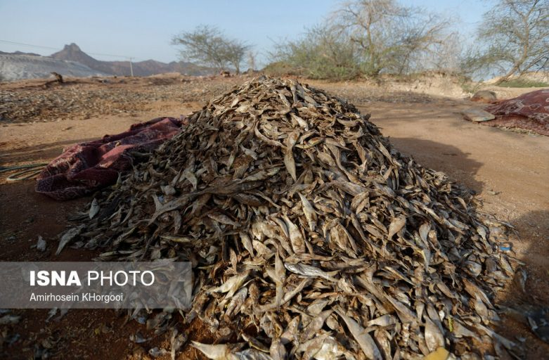 لیست قیمت پودر ماهی خوراک دام ویرا