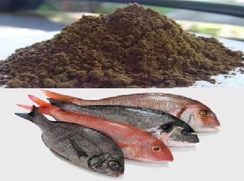 فروش پودر ماهی خوراک دام چابهار
