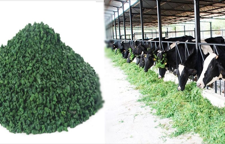 میزان مصرف کنسانتره در گاوهای خشک آبستن