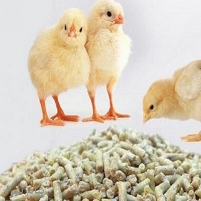خرید فروش دان آماده مرغ گوشتی