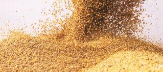 نمایندگی فروش انواع سویا دامی وارداتی و داخلی