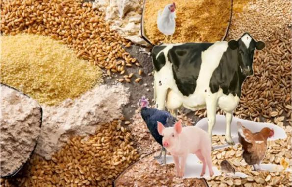 واردات عمده انواع خوراک دام تضمینی
